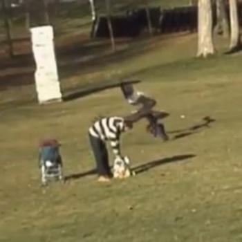 águia, bebê, parque, montreal, canadá,vídeo
